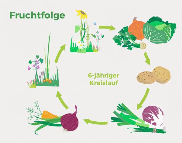 wirgarten_illustration_fruchtfolge_580px