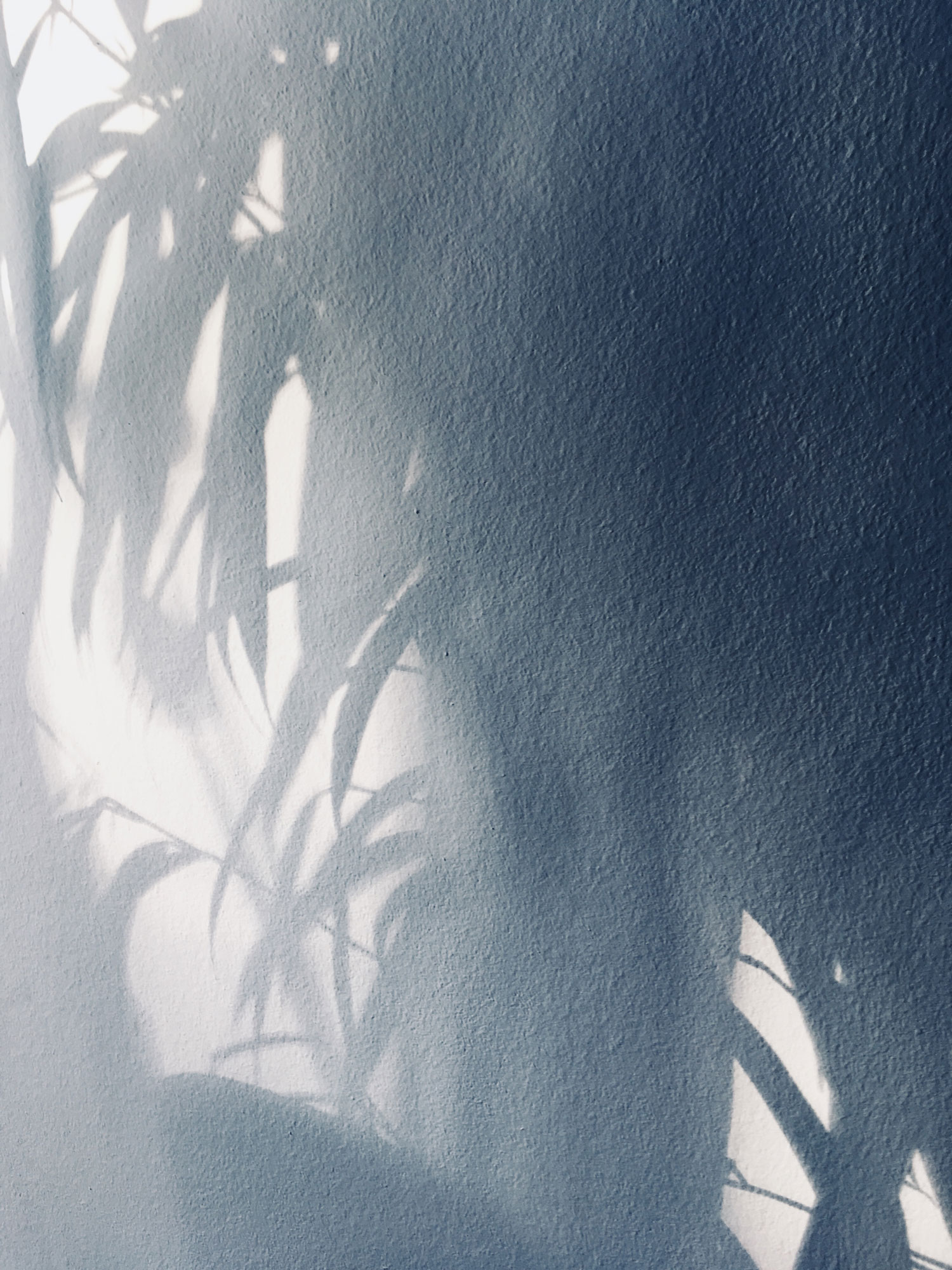 nadine bieg palm shadowplay wait for summer